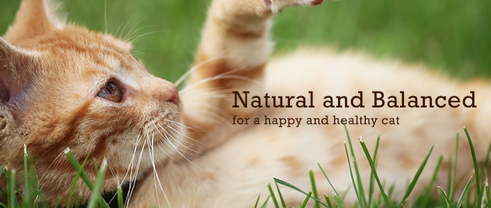 Holistic Cat Foods